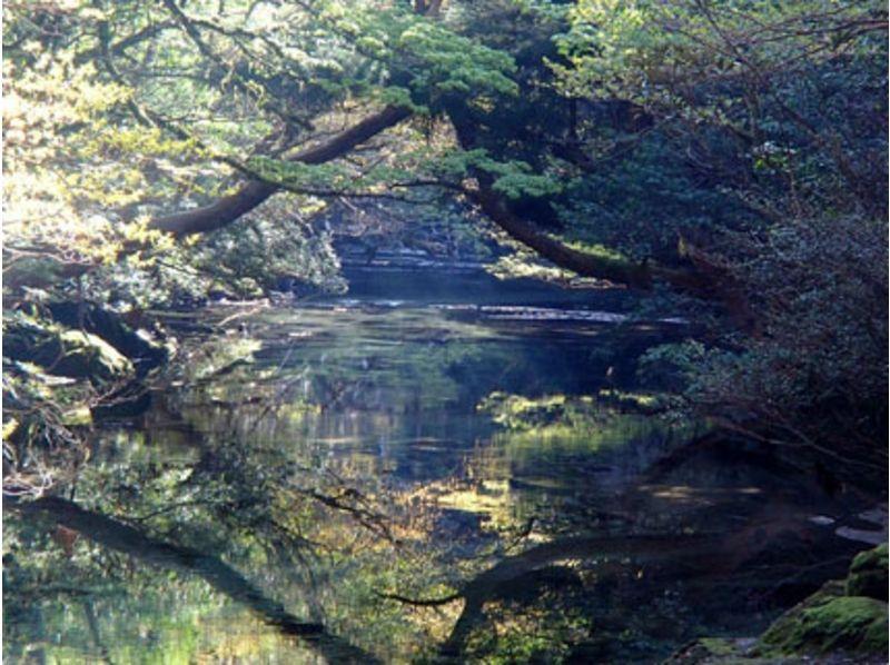 【屋久島・1日】神秘の森でトレッキング&カヌーの神秘のツアーの紹介画像
