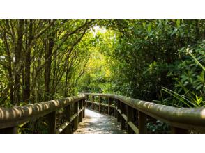 【沖縄・那覇発】いざやんばるへ!クイナの森とマングローブ林・ 大石林山を巡る、やんばる国立公園自然満喫コース(Cコース)11月~3月出発