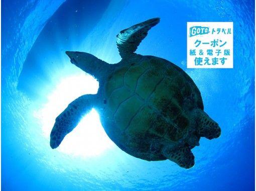 前日予約OK!!【宮古島】驚異の遭遇率!ウミガメと泳ごう!絶景ビーチでウミガメシュノーケリング 初心者OK!カメラ付き!写真プレゼント!の紹介画像