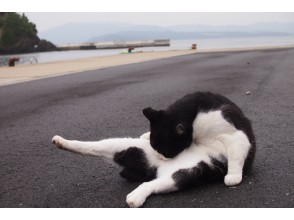 """[Online] For cat lovers, Miyagi """"Tashirojima"""" by cat lovers / Let's take a walk on Cat Island, which has more cats than people!"""