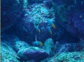【周参見・黒潮の海】1ボート+1ビーチダイビング1日コース(6月~11月)の画像