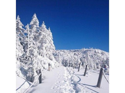 【長野・北八ヶ岳】登山ガイドが案内する北八ヶ岳スノーシュー体験