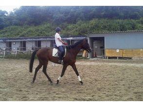 【奈良・生駒】乗馬ビジターコース 【初級~上級まで各コース有り!!】の画像