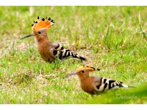 【慶良間諸島・座間味島】自然観察ガイドツアー。海も良いけど山も良い!南の島には珍しい生き物がたくさん。昆虫・植物・野鳥などをガイドします。