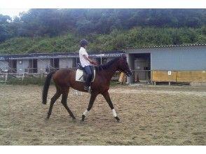 【初心者でも安心!】体験乗馬コース(30分)【奈良・生駒】の画像