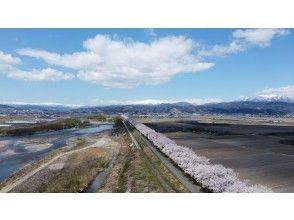 【山形・寒河江】春だ!桜だ!オープニングキャンペーン!季節限定!地元ガイドが案内!クロスバイクで行く寒河江・桜巡りツアー