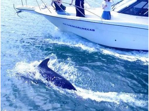 【鹿児島・鹿児島市】野生のイルカを探そう!桜島に生息するイルカと出会えるクルージングツアー