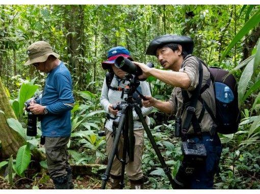 【オンラインツアー】現地から生中継!バーチャルツアーでコスタリカの森への紹介画像
