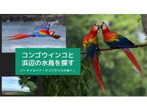 【オンラインツアー】現地から生中継!バーチャルツアーでコスタリカの森へ