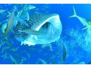 免费照片和视频拍摄! |鲸鲨浮潜|初学者OK♪