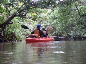 【沖縄・西表島】世界自然遺産登録地!6.マングローブの川カヌー体験クーラの滝つぼ&水牛車観光1日、写真データ、昼食付き