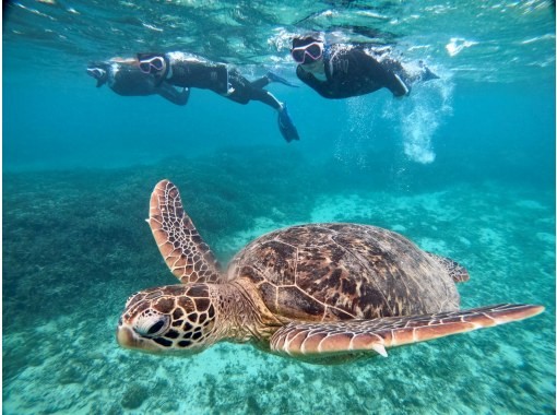 奄美ブルーの海で海ガメと泳ごう‼️【アドバンスコース】海ガメスイム