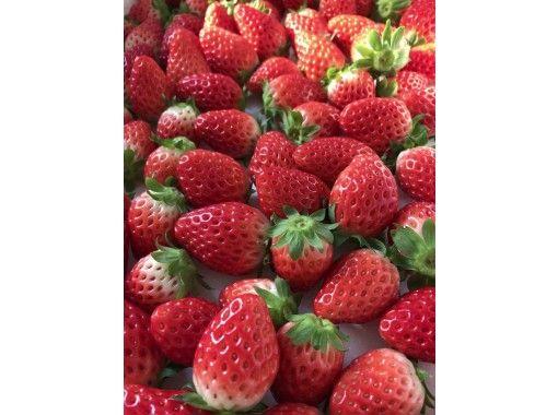 ★ 仅限四月 ★ 富士山越野车引以为豪的长路线 1 小时 & 富士山最大的草莓狩猎园 ★ 草莓狩猎 30 分钟任吃の紹介画像