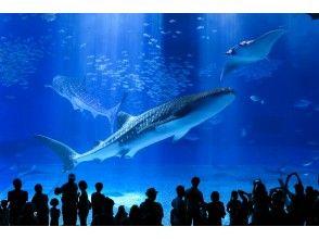 【沖縄・那覇発】美ら海水族館とたっぷり沖縄満喫バス