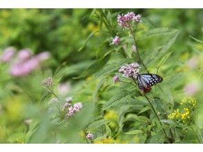 ※追加開催決定!【栃木・奥日光】<面白い虫をさがそう!>夏の湯元で花を訪れる昆虫観察♪【お子様歓迎!大人だけ参加もOK・少人数・マニアック】