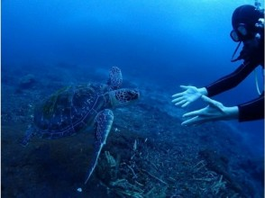 【屋久島・海山セット】縄文杉トレッキング&体験ダイビング2日コースの画像
