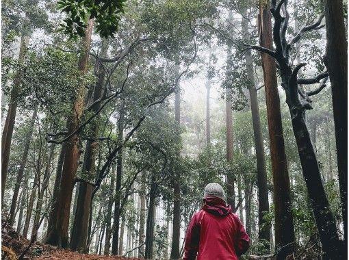 【オンラインツアー】3/27(土)開催 東京・伊豆大島~大地のパワーを感じよう♪ 神秘の森とオオシマザクラの紹介画像