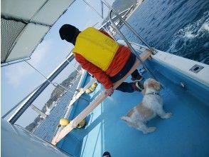 【熊本・天草】【愛犬と一緒】無人島ピクニッククルージング ★貸切ツアー ★モニター価格