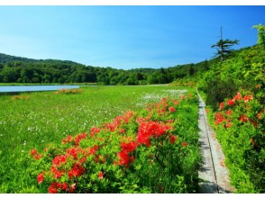 [Akita Prefecture] Experience the largest swamp, Onuma, and live volcanoes in Hachimantai, where alpine plants grow in clusters, with the guidance of a guide!