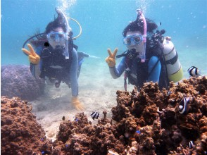 【2名様~・通年3時間一組貸切・感染予防/温水シャワー更衣室完備 GOTOクーポン】沖縄本島南部観光のついで  お手軽貸し切り体験ダイビング