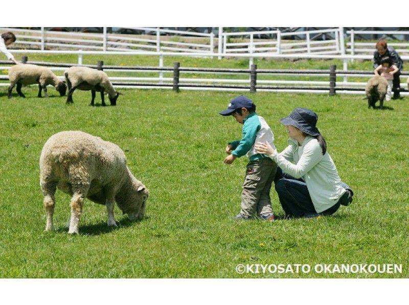 【山梨】=英語でGO!=【A】動物に会いに行こう! 清里まきば公園でピクニックの紹介画像