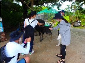 【沖縄・西表島】世界自然遺産登録地!5.マングローブの川カヌー体験クーラの滝つぼ&水牛車観光1日、写真データ、昼食付き