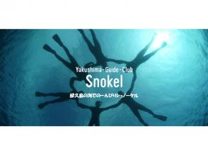 【鹿児島・屋久島】ウミガメに会えるかも?シュノーケル体験(半日コース)