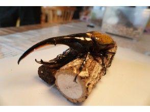 [广岛县府中市]遇到一只超稀有的甲虫,做木工,并待在一座已有100年历史的联排别墅中。