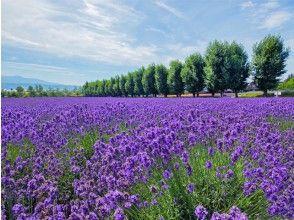 【北海道・札幌発着】富良野オムカレーランチ&北星ファームで新鮮メロン食べ放題!富良野ラベンダー畑と美瑛青い池を楽しむ旅