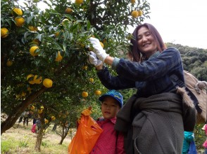 [Aichi / Okazaki City] A lot of play! Experience hunting yuzu and making yuzu syrup in the bran experience village