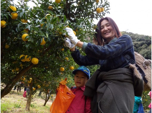 [Aichi / Okazaki City] A lot of play! Experience hunting yuzu and making yuzu syrup in the bran experience villageの紹介画像