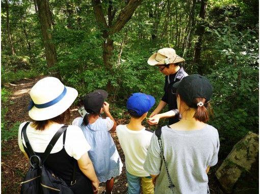 【広島・帝釈峡・神石高原】親子で、三世代で、森から学ぼう!ログハウスに泊まって森林セラピー体験 のびのび家族旅行1泊2日の紹介画像