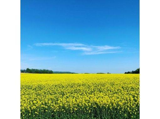 [北海道/ T川]油菜花行人路,由专业向导在江户津山上<初学者确定>の紹介画像