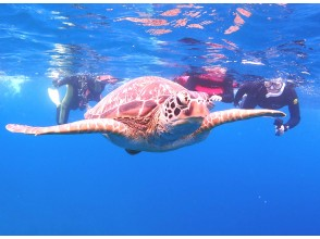 """[Ishigaki island Diving / Afternoon] Let's swim with sea turtles! """"PM half-day experience Diving boat tour with sea turtle Snorkeling"""