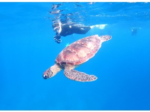 """[Ishigaki island Snorkeling / Afternoon] Let's swim with sea turtles with an encounter rate of 90%! """"PM half-day Limited Sea Turtle Snorkeling Tour"""""""