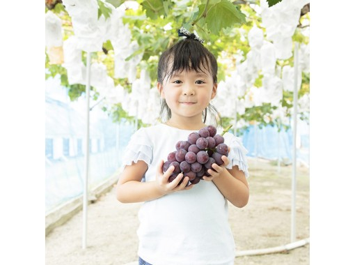 【Okayama・Akaiwa】 Grapes Plan ~ Pione Sampling 1 Bunch (40min)の紹介画像