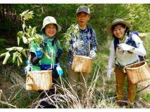 """【信州・南相木村】山菜採り体験 ♪ """"自然の恵み探しを楽しみませ んか"""""""