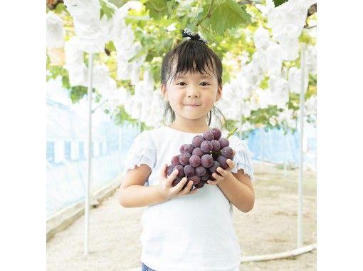 【Okayama・Akaiwa】 Grapes Plan ~ Muscat Sampling 1 Bunch(40min)の紹介画像
