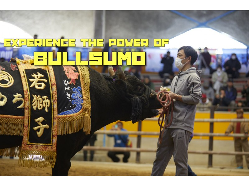 Take the online BULLSUMO tour in Uwajima, Japan from your home !!!の紹介画像