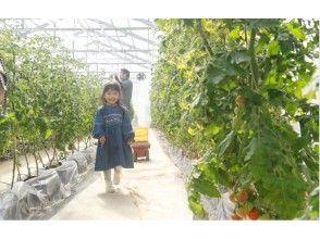 【東京・青梅】都内から電車で1時間 農業体験 ~トマトのお土産付き・BBQプランあり~ 旅する やさい