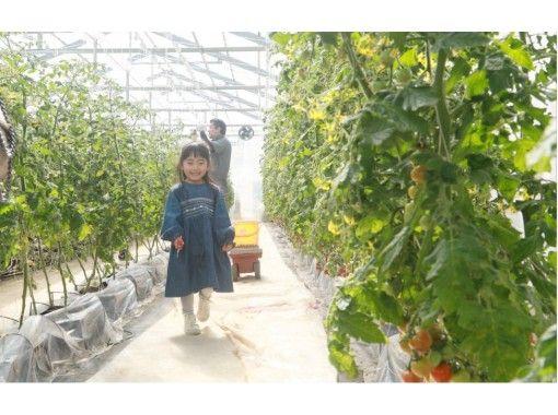 【東京・青梅】都内から電車で1時間 農業体験 ~トマトのお土産付き・BBQプランあり~ 旅する やさいの紹介画像