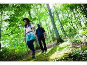 [Kuromatsunai Town, Hokkaido] Utasaibunabayashi Guide Walk (Long Course / 180 minutes) Let's go to the end of the natural monument forest