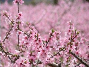 【和歌山・紀の川】1日4組限定!食育を推進する道の駅から歩いて桃畑へ!桃のお花見はいかが?【きのかわステイファーム】