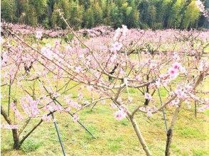 【和歌山・紀の川】1日4組限定!広い空と桃色に染まった桃畑でゆったり時間!「あら川の桃」農園でお花見【きのかわステイファーム】