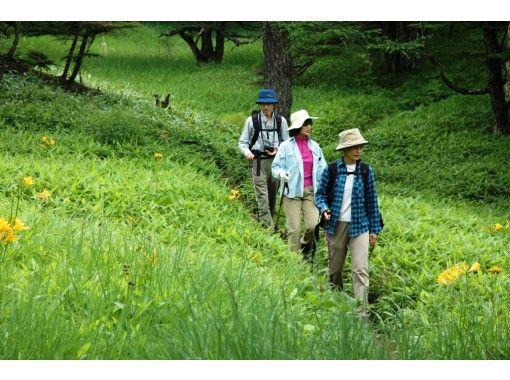 【長野・高峰高原】高峰高原で至福の自然体験を。≪春・夏≫四季折々のフラワーウォッチング