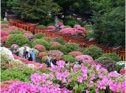 东京杜鹃花(R)的3000杜鹃花和花寺牡丹花园和东京第一大紫藤著名花旅游巴士之旅-寿司午餐-[P017066]の紹介画像