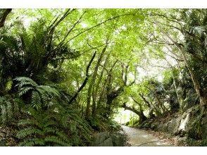 【鹿児島・鹿児島市】★地域共通クーポン★自然が作り出した素材で染めよう「草木染め体験」と庭園見学のセット
