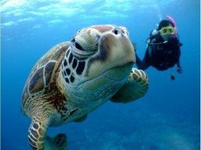 【沖縄・慶良間】8歳から参加可能!体験ダイビング&シュノーケリング(1日コース)