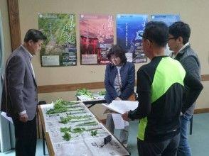 "[Hijiori Onsen, Yamagata Prefecture] ""Hijiori Sansai School"" ★ Experience picking edible wild plants in a mountain rich in nature * Learn ""Sansai studies"" at Hijiori Onsen ♪ (with edible wild plants lunch))"