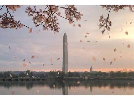 【オンラインツアー】4/11(日)開催 東京・千鳥ヶ淵 ✕ ワシントンポトマック川沿い 桜ウォークの紹介画像